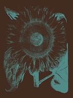 "Sunflower 6 - 12"" x 16"""