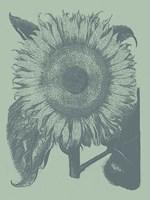 "Sunflower 8 - 12"" x 16"""