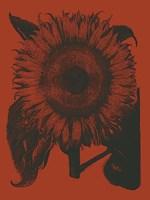 "Sunflower 9 - 12"" x 16"""