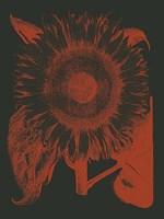 "Sunflower 10 - 12"" x 16"""