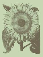 "Sunflower 11 - 12"" x 16"""