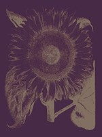 "Sunflower 13 - 12"" x 16"""
