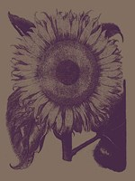 "Sunflower 14 - 12"" x 16"""