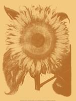 "Sunflower 19 - 12"" x 16"""