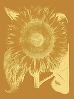 Sunflower 20 Fine Art Print