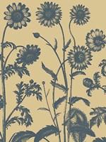"Chrysanthemum 1 - 12"" x 16"""