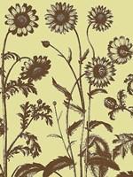 "Chrysanthemum 4 - 12"" x 16"""