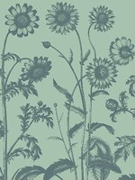 "Chrysanthemum 8 - 12"" x 16"""