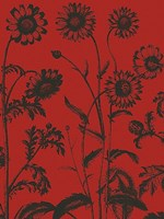 "Chrysanthemum 9 - 12"" x 16"""