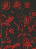 "Chrysanthemum 10 - 12"" x 16"""