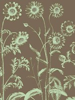 "Chrysanthemum 12 - 12"" x 16"""