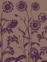 "Chrysanthemum 14 - 12"" x 16"""