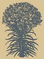 "Lilies 1 - 12"" x 16"", FulcrumGallery.com brand"