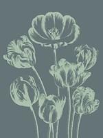 """Tulip 7 - 12"""" x 16"""""""
