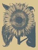 "Sunflower 1 - 18"" x 24"""