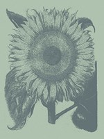 "Sunflower 8 - 18"" x 24"""