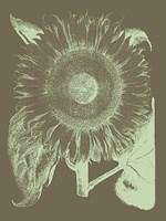 "Sunflower 12 - 18"" x 24"""