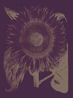 "Sunflower 13 - 18"" x 24"""