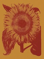 Sunflower 15 Fine Art Print