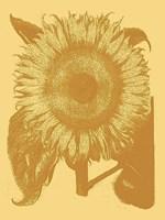 "Sunflower 19 - 18"" x 24"""