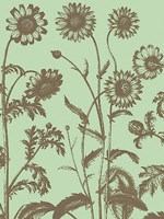 "Chrysanthemum 11 - 18"" x 24"""