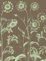 "Chrysanthemum 12 - 18"" x 24"", FulcrumGallery.com brand"