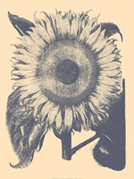 "Sunflower 1 - 24"" x 32"""