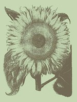 "Sunflower 11 - 24"" x 32"""