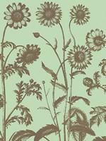 "Chrysanthemum 11 - 24"" x 32"""