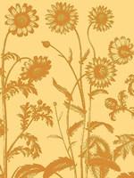 "Chrysanthemum 19 - 24"" x 32"""