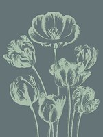 """Tulip 7 - 24"""" x 32"""""""
