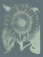 "Sunflower 7 - 30"" x 40"", FulcrumGallery.com brand"