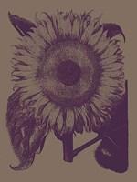 "Sunflower 14 - 30"" x 40"", FulcrumGallery.com brand"