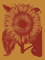"Sunflower 15 - 30"" x 40"", FulcrumGallery.com brand"