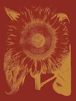 "Sunflower 16 - 30"" x 40"", FulcrumGallery.com brand"