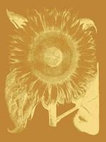 "Sunflower 20 - 30"" x 40"", FulcrumGallery.com brand"