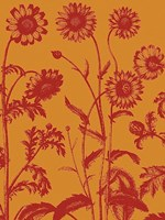 "Chrysanthemum 15 - 30"" x 40"", FulcrumGallery.com brand"