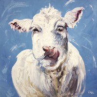 "20"" x 20"" Cow Pictures"