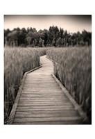 """Towards Woods by Andrew Ren - 13"""" x 19"""""""
