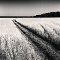 """Oceanside Field by Andrew Ren - 12"""" x 12"""""""