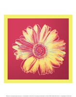 "Daisy (fuchsia & yellow), 1982 by Andy Warhol, 1982 - 11"" x 14"""