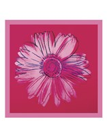 Daisy, c. 1982 (crimson and pink) Fine Art Print