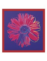Daisy, c.1982 (blue & red) Fine Art Print