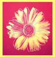 "Daisy (fuchsia & yellow), 1982 by Andy Warhol, 1982 - 12"" x 12"""