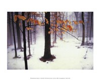 "Quiet Woods by David Lorenz Winston - 14"" x 11"""