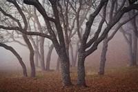 "Pilot Road Trees by David Lorenz Winston - 24"" x 16"""