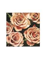 """Roses by Elizabeth Hellman - 11"""" x 14"""""""