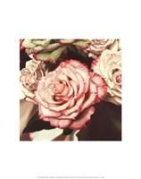 "Vintage Rose by Elizabeth Hellman - 11"" x 14"""