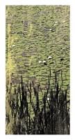"""Lily Pond I by Erin Clark - 14"""" x 26"""""""