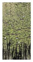 """Lily Pond II by Erin Clark - 14"""" x 26"""""""